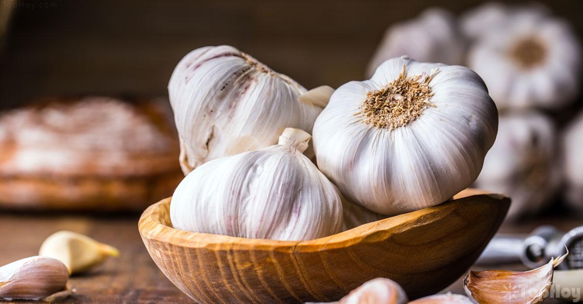 15 beneficios del ajo para el cuerpo humano
