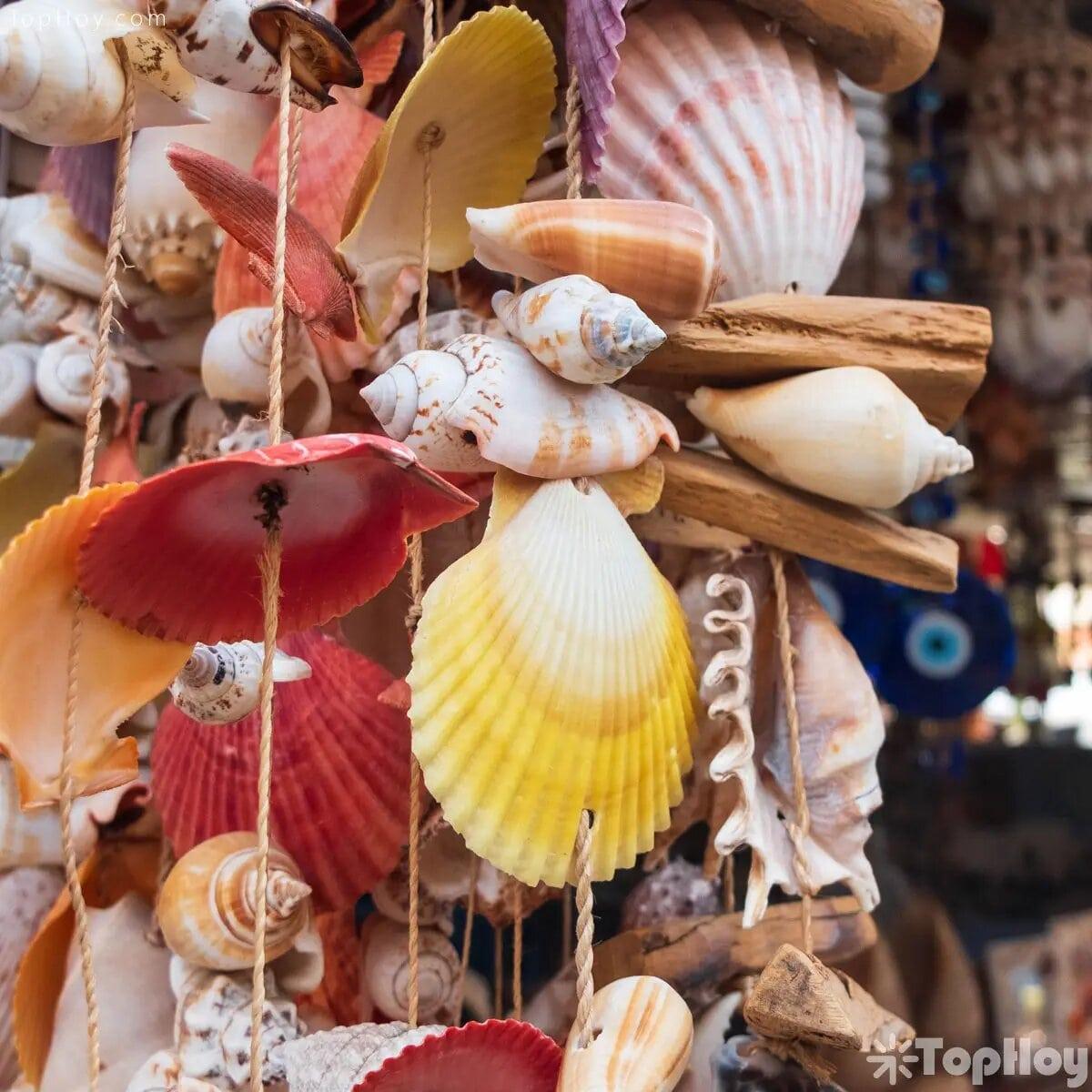No se te ocurra adornar la casa con conchas marinas y caracoles; solo traen mala suerte.