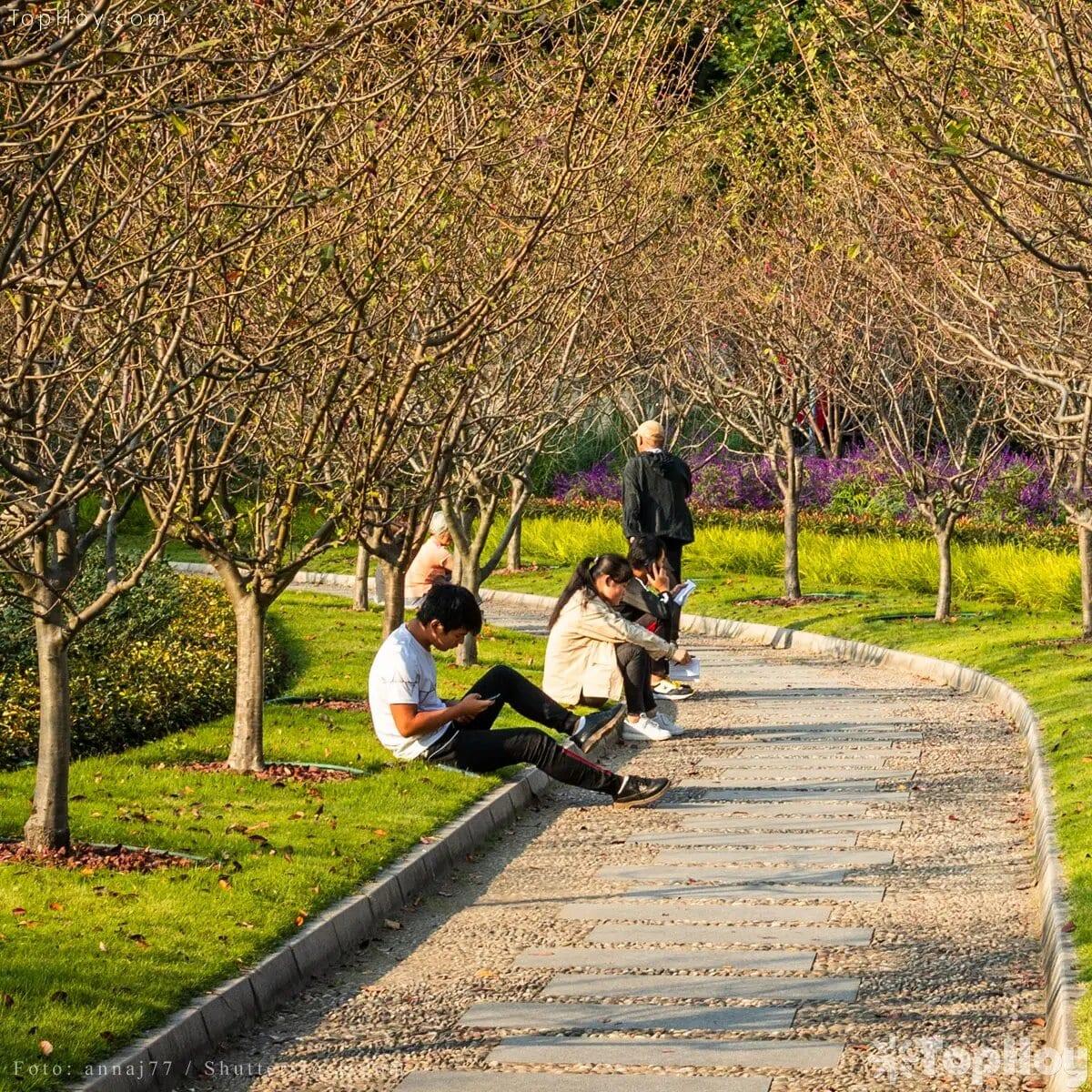 Masaje con árboles