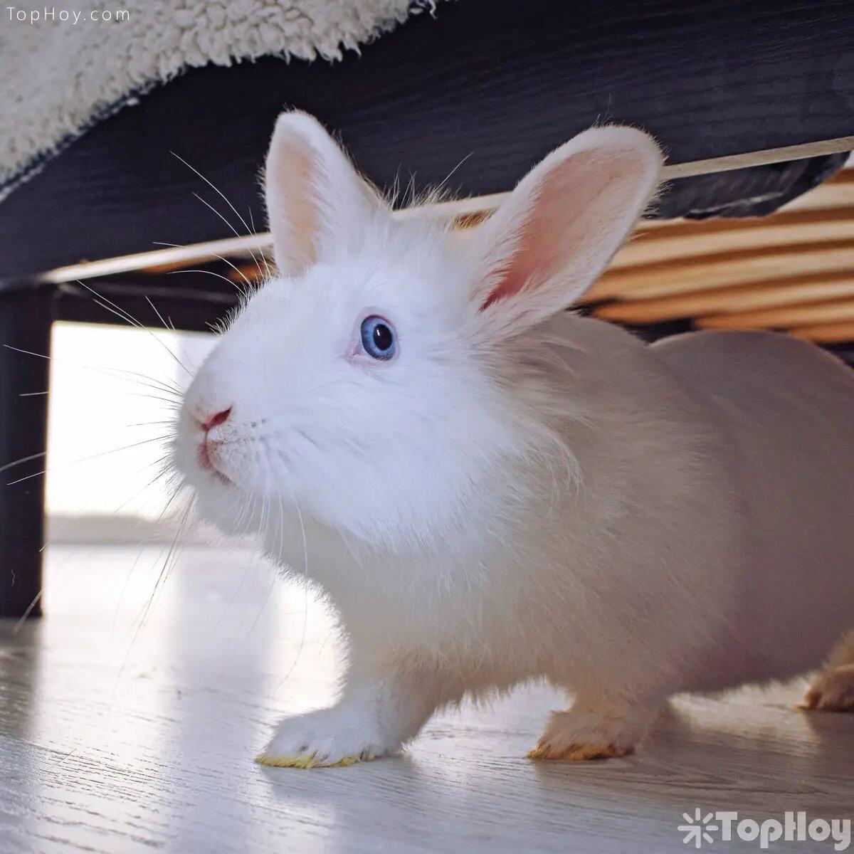 Cuando se tiene un conejo como mascota, los dueños deben modificar partes de su casa con el objetivo de que éstas sea segura para los conejos.