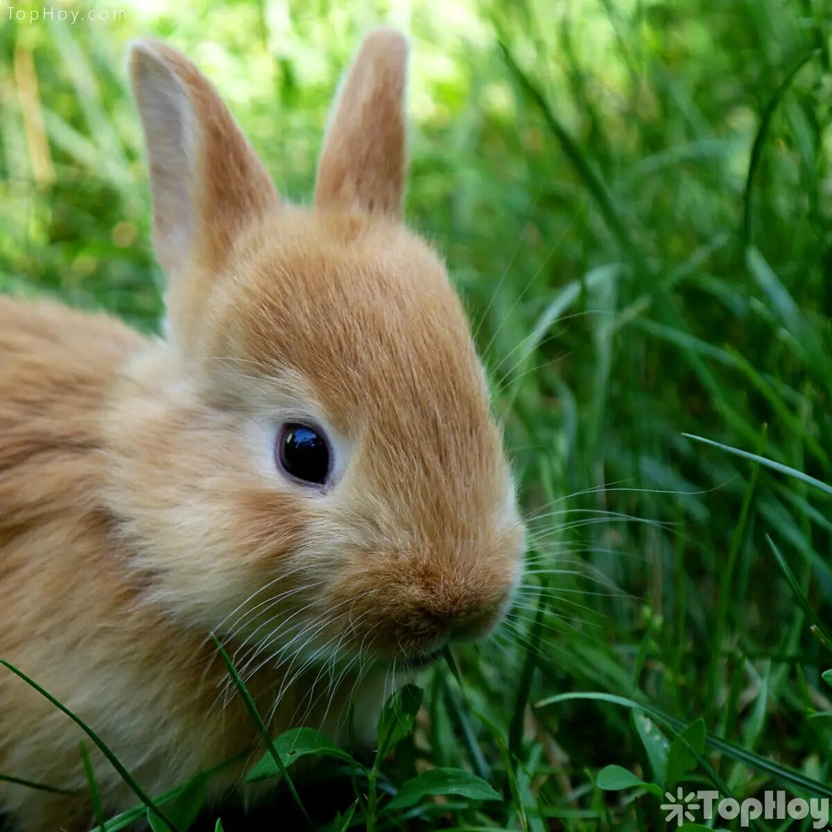 Las crías de conejos reciben el nombre de gapazos.