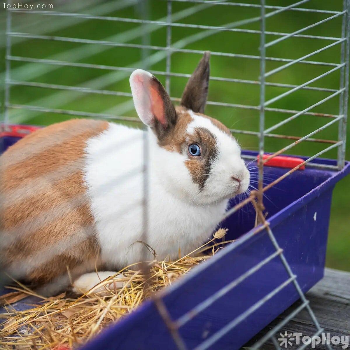 Los cuidados que debe recibir un conejo son complejos, nada parecidos a los que se ofrecen a un perro o un gato.