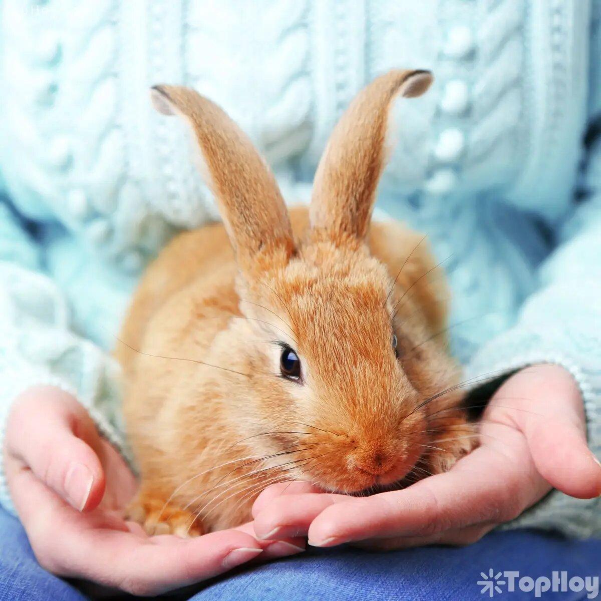 Los conejos nunca manifestarán si sienten dolor o si presentan heridas, por lo que sus dueños deben chequear sus cuerpos constantemente.